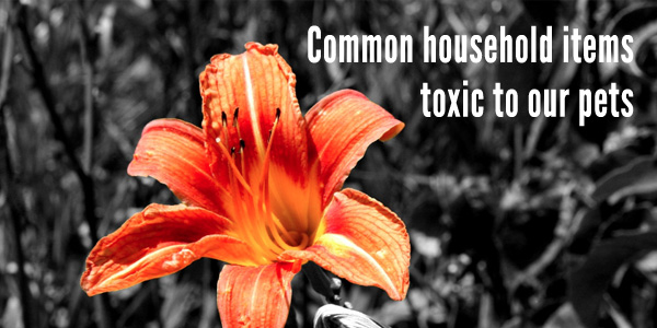 toxic household items for pets